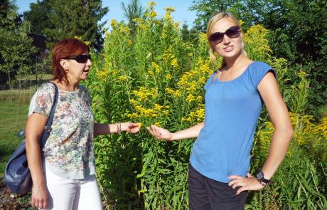 Roślina inwazyjna – Nawłoć